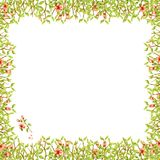 Watercolor frame square of thin branches with green leaves and tender light peach orange flowers with petals beautiful isolated on. Watercolor frame square of Royalty Free Stock Photography