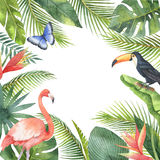 Watercolor frame of tropical birds and exotic plants isolated on white background. Stock Photos