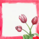 Watercolor frame with tulips. Red watercolor illustration: frame with tulips Royalty Free Stock Image