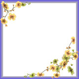 Watercolor frame yellow flowers on a white background royalty free stock images
