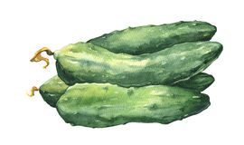 Watercolor fresh cucumbers Stock Image