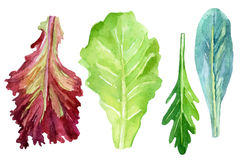 Watercolor fresh greens set Royalty Free Stock Images