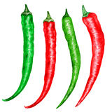 Watercolor fresh red, green chili pepper isolated on white background, hand drawn vector illustration, cooking Royalty Free Stock Images