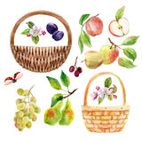 Watercolor fruit, berry and wicker basket set Royalty Free Stock Photography