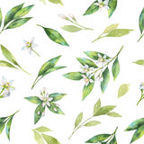 Watercolor fruit orange seamless pattern of flowers and leaves isolated on white background. Stock Image