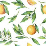 Watercolor fruit orange seamless pattern of flowers and leaves isolated on white background. Royalty Free Stock Photos