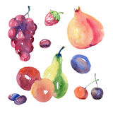 Watercolor fruit set. Watercolor painting. Fruit set on white background Royalty Free Stock Image