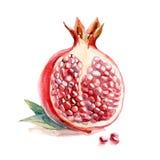 Watercolor fruit, slice garnet with leaf Stock Photo