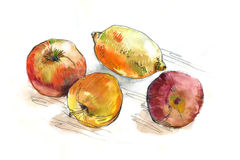Watercolor fruit on the table Royalty Free Stock Photography