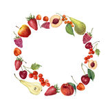 Watercolor fruit wreath card. Hand painted border with summer fruit and berries isolated on white background. Botanical Stock Photos