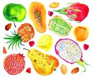 Watercolor fruits, berries and nuts set. Pear, aplle, pitahaya, pineapple, citrus, papaya, pomegranate. Hand drawn illustration royalty free illustration
