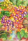 Watercolor of fruits. Illustration of tropical fruits.Created by watercolor technique stock illustration