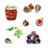 Watercolor fruits and jam. Watercolor painting. Set of fruits. Figs and jam on white background Royalty Free Stock Images