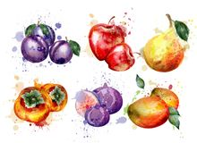 Watercolor fruits set Vector. Apple, plum, pear summer fruit compositions. Watercolor fruits set Vector. Apple, plum, pear summer fruit collection royalty free illustration
