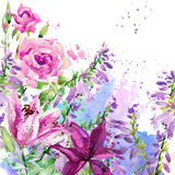 Watercolor garden flowers. flowers background. Royalty Free Stock Images