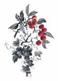 Watercolor garden rowan plant seamless pattern Royalty Free Stock Image