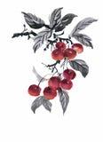 Watercolor garden rowan plant vector illustration Stock Image