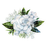 Watercolor gardenia and gypsophila vignette Stock Photos