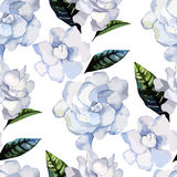 Watercolor gardenia pattern Royalty Free Stock Photography