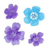 Watercolor geranium flower set. Isolated watercolor geranium flower set Royalty Free Stock Image
