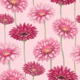 Watercolor gerber flowers Stock Image