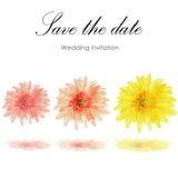 Watercolor   gerbera flowers Stock Images