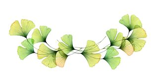 Watercolor Ginkgo leaves border. Horizontal arrangement of branches. Transparent green foliage isolated on white