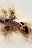 Watercolor giraffe headshot 2 royalty free stock photography