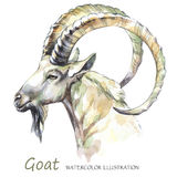 Watercolor goat on the white background. Mountain animal. Wildlife art illustration. Can be printed on T-shirts, bags Royalty Free Stock Photography
