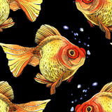 Watercolor golden fish. Hand painted drawing of outline isolated on black background Stock Photography