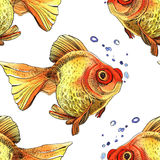 Watercolor golden fish. Hand painted drawing of outline isolated on white background Stock Photo
