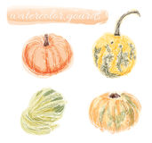 Watercolor Gourds and Pumpkin. Vector collection of hand drawn water color gourds and pumpkin Royalty Free Stock Image