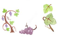 Watercolor grape design elements Royalty Free Stock Photos