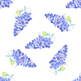 Watercolor grape with leaves in vintage style Stock Image