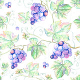 Watercolor Grape. Royalty Free Stock Photo