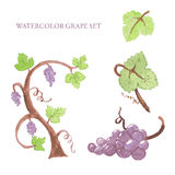 Watercolor grape set Royalty Free Stock Photography