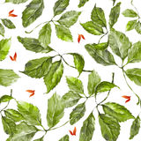 Watercolor grapes green leaves seamless pattern. Seamless pattern with watercolor dry autumn wild grape green and red leaves on white stock illustration