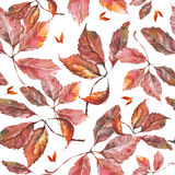Watercolor grapes red leaves seamless pattern Royalty Free Stock Photos
