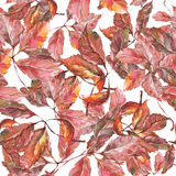 Watercolor grapes red leaves seamless pattern. Seamless pattern with watercolor dry autumn wild grape red leaves on white stock illustration