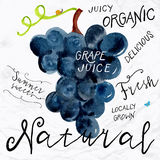Watercolor grapes stock illustration