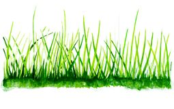 Watercolor grass background. stock images