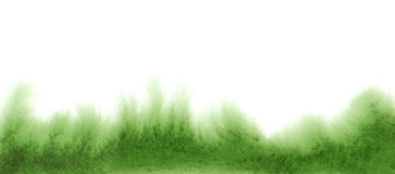 Watercolor grass on white background. Hand painted abstract texture Stock Photos