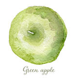 Watercolor green apple - hand painted  Stock Image