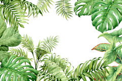 Watercolor green background with tropical plants. Hand drawn  branches and leaves of tropical plants. Natural green background with space for text. Watercolor Royalty Free Stock Photography