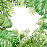 Watercolor green background with tropical plants. Hand drawn branches and leaves of tropical plants. Natural green background with space for text. Watercolor Royalty Free Stock Images