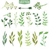 Watercolor green branches.Vintage floral set Royalty Free Stock Photo