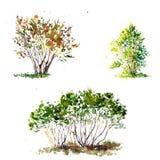 Watercolor green bushes Stock Photo