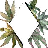 Watercolor green cannabis leaves. Leaf plant botanical garden floral foliage. Frame border ornament square. Aquarelle leaf for background, texture, wrapper royalty free illustration