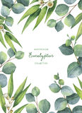 Watercolor green floral card with eucalyptus leaves and branches isolated on white background. Royalty Free Stock Photography