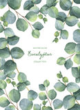 Watercolor green floral card with silver dollar eucalyptus leaves and branches isolated on white background. royalty free illustration